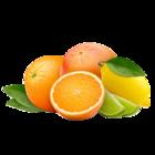 Citrus: Zitrone-Limette-Grapefruit (Sorbet)